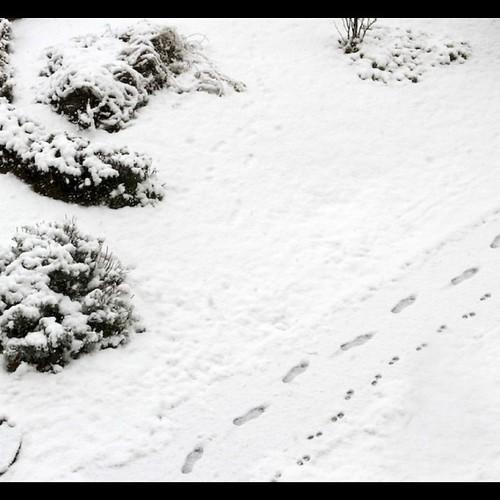 Walk on the snow