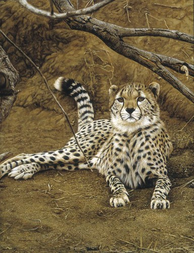 "'Young Cheetah' oil on board 16½"" x 12½"