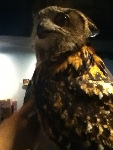 Ruby the owl