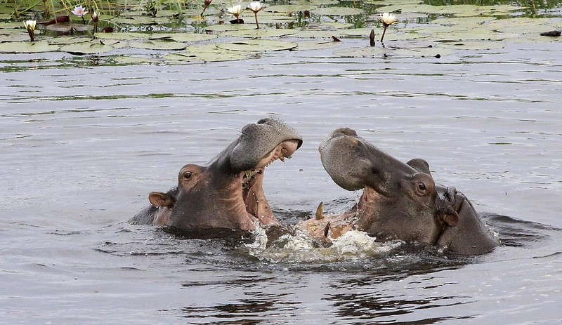 6784 Chobe National Park