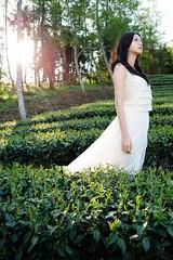 [フリー画像素材] 人物, 女性 - アジア, 人物 - 田園・農場, お茶, 台湾人, ワンピース・ドレス ID:201204042200
