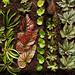 leaf propagation