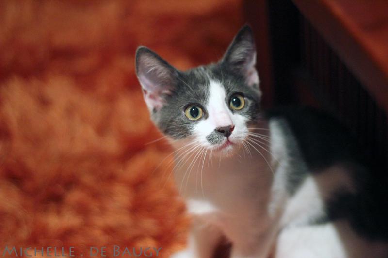 kittenblog007