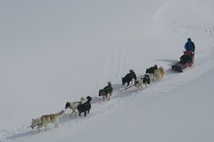 dog(1.0), winter(1.0), snow(1.0), pet(1.0), mushing(1.0), dog sled(1.0), sled dog racing(1.0), sled dog(1.0),