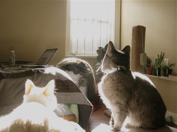 sun spots cats 003
