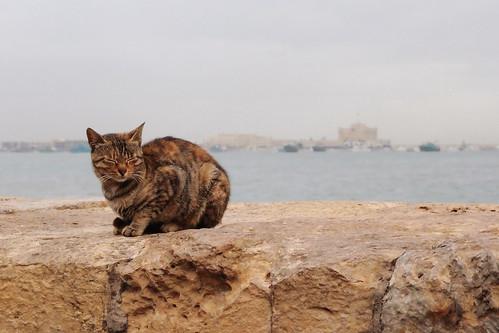 Alxandria_Cairo01