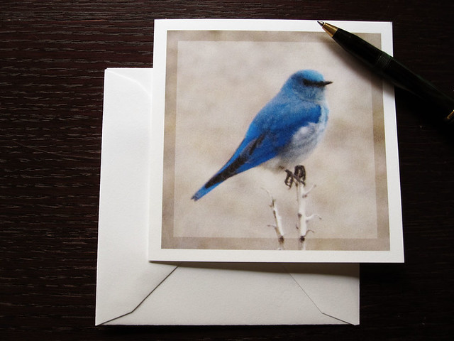 Nature bluebird card, a blue bird minimalist blank card, of the bluebird of happiness.
