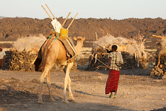Camel transport below Erta Ale