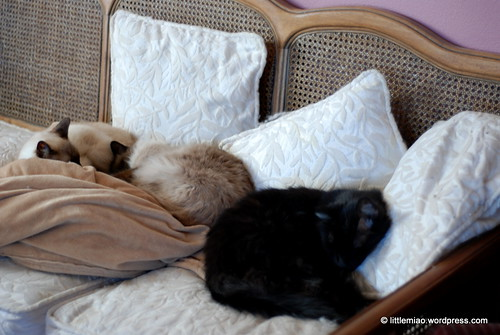 miao brothers 4-6-2012 4-23-31 PM