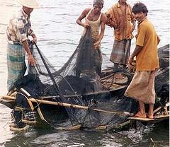 孟加拉的漁民 (USAID提供)