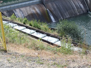 Fish Ladder at Cazadero Dam, Clackamas River