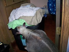 Ori checking out the laundry