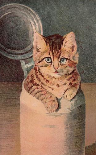 Kitten in Can