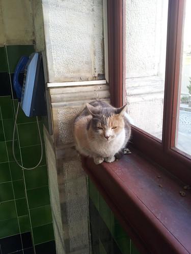 Tünel kedisi az ablakpárkányon, azaz otthon