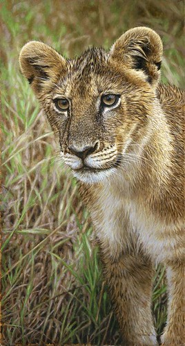 "'Wet Lion Cub' oil on board 19½"" x 10½"