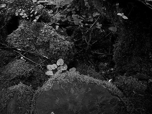 rocks by Nature Morte