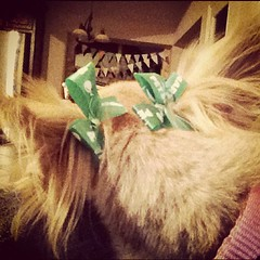 They even put bows in her hair for St. Pats day.