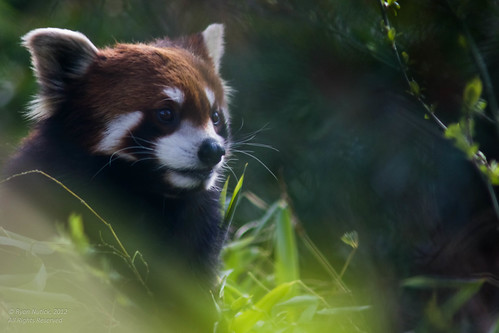 Woodland Park Zoo - March 2012