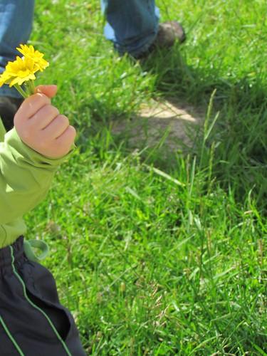 Apanhou flores