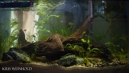 Sinder's Planted Aquarium