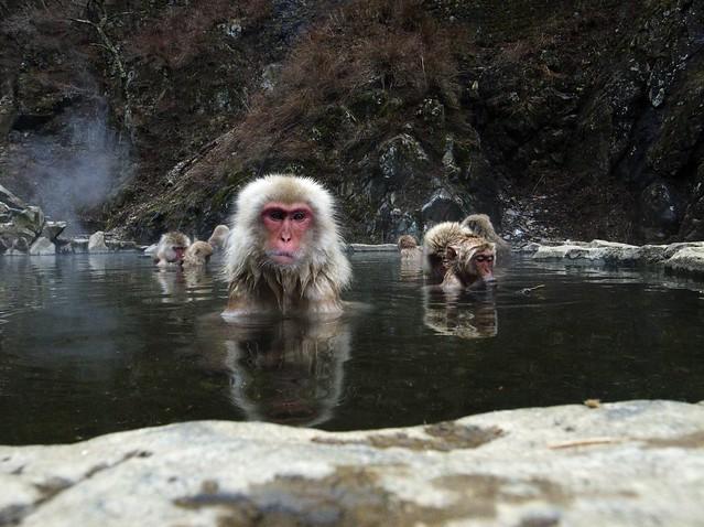 Spa monkeys #1