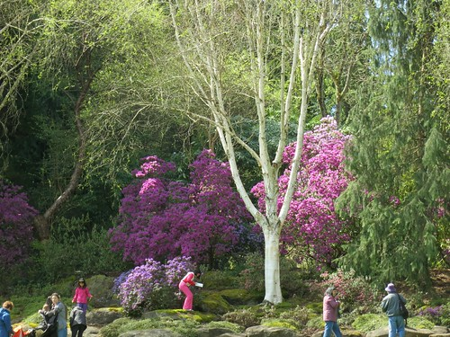 Exploring the rhododendron groves