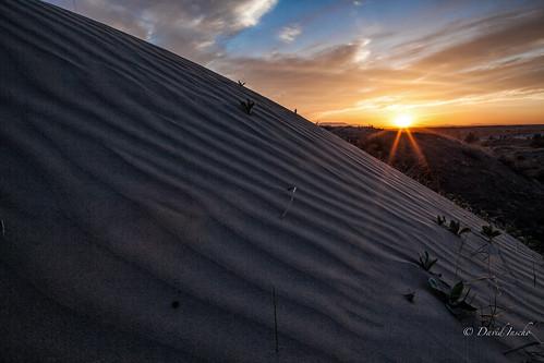 desert easternwa sagelands juniperduneswilderness