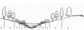 bandas vegetación