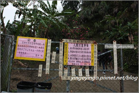 台中市北屯_大坑濁水巷櫻花林20120225_I2717