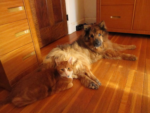 Proof that cats and dogs can get along