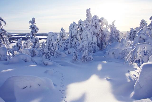 Talvi Keimiö 2012 342