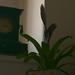 2012-03 orkideak-27