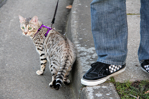 KittyWalk09