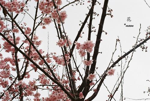 美花 by moon_o