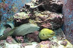 珊瑚礁之旅