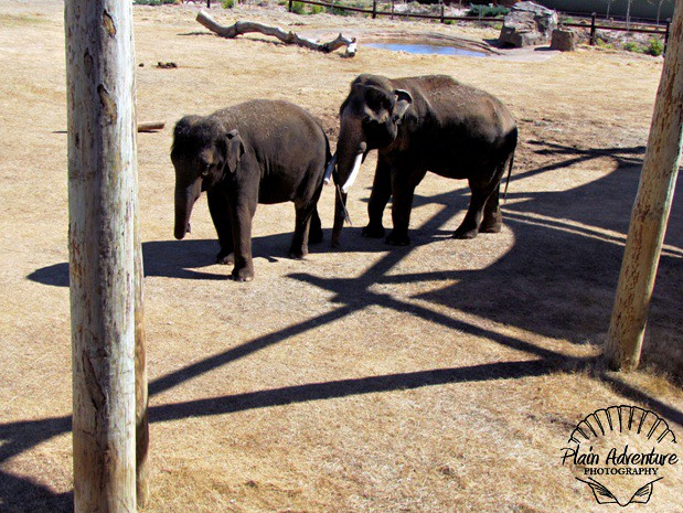 Male and Female Asian Elephant
