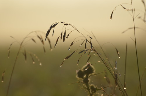 morning summer sunlight nature water colors grass digital sunrise photography droplets delicate morningdew