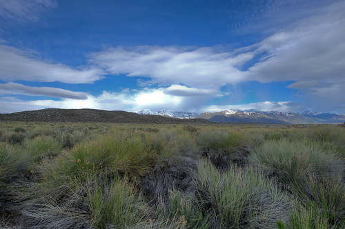 Grass near Mono Lake