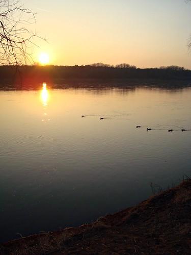 sunset bird river geotagged duck poland warsaw vistula białołęka