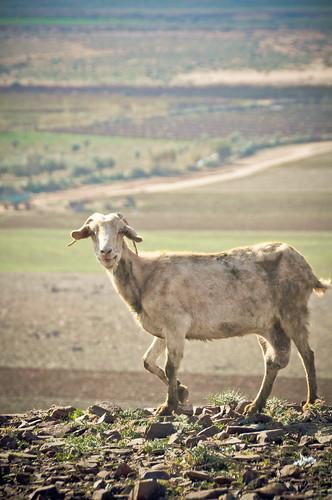 Marrakech111230-11