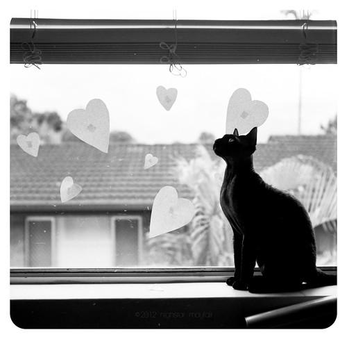 a cat's love