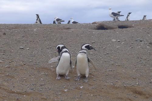 Punta Arenas-121