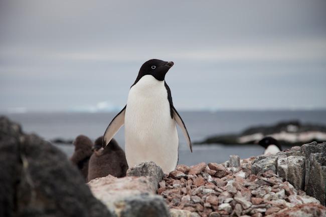 antarctica-blog-35