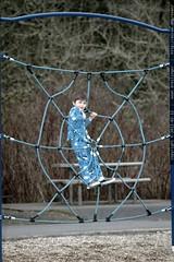 spiderman sequoia    MG 8576
