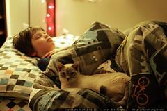 nick sleeps while kitten keeps watch    MG 8701