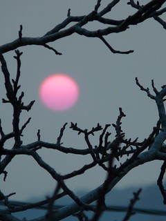 PINK SUN (February 18, 2012 at 5.06pm CET)