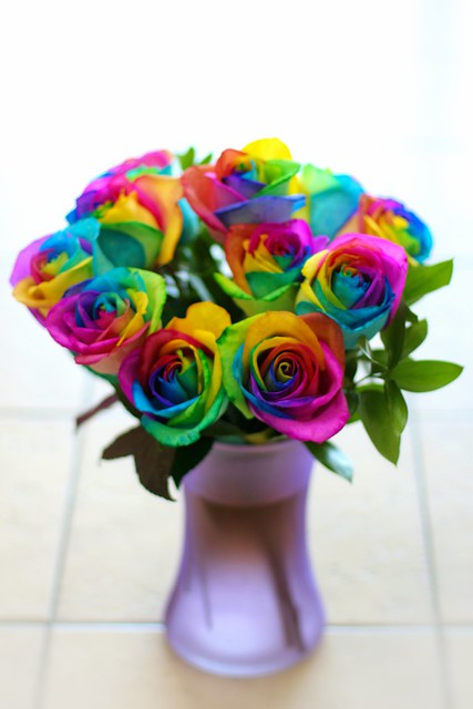 Rainbow colored roses flickr photo sharing for Rainbow dyed roses