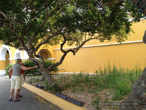 Curacao Caribbean Street Art 04