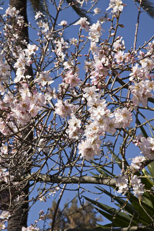 Siviglia Alcazar fiori
