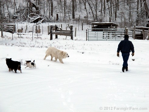 Snow dogs 6 - FarmgirlFare.com